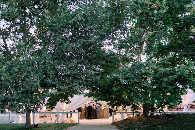 Magic under the trees of @kestrelpark. ⠀⠀⠀⠀⠀⠀⠀⠀⠀ Photography: @katieshuler Rentals: @tacer_losangeles Lighting: @sparkcreativeevents Floral Design: @camelliafloraldesign Catering: @omnicateringsb