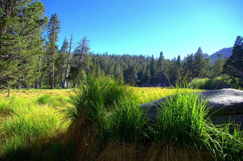 What a difference a little altitude does. Lush grass growing in Round Valley Meadow. Mount San Jacinto State Park, California