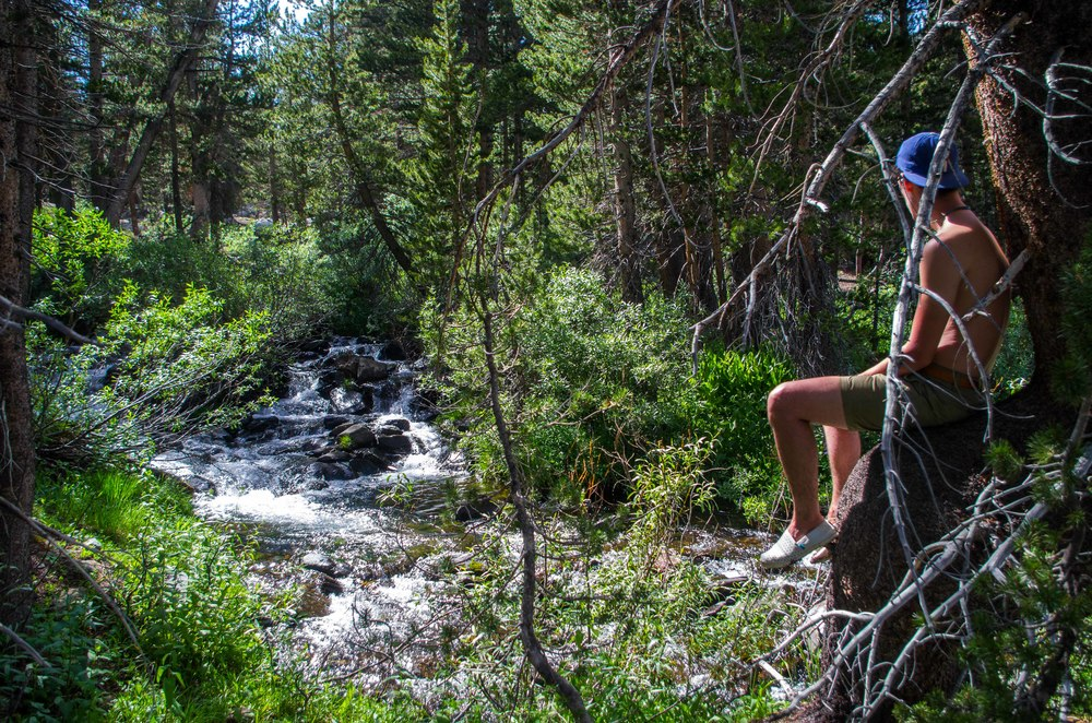 Hidden waterfall in the woods of Sawmill Walk-In Campground. Mono County, California