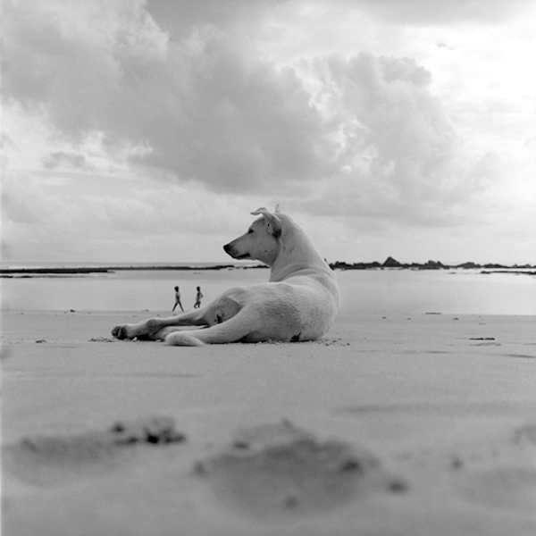 Dog on the Beach, Morro de Sao Paolo, Brazil