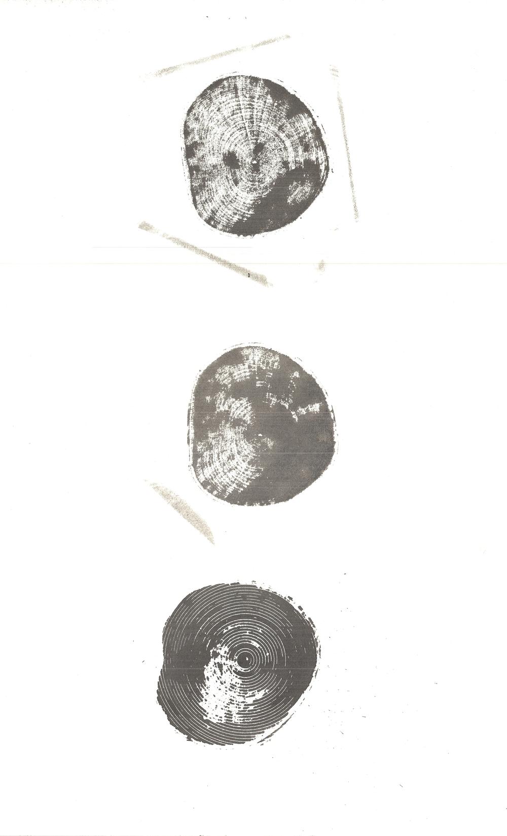 TreeScan003.jpg
