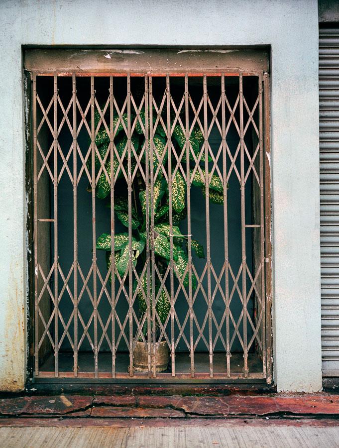 flower-fence.jpg