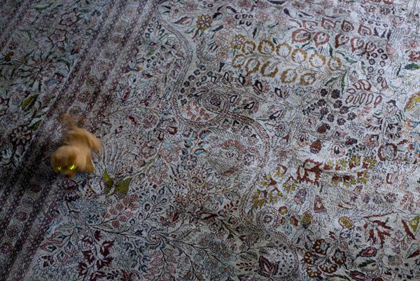 Electro Dog, 2011