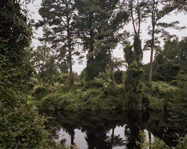 The Great Dismal Swamp, Virginia/North Carolina border, 2009