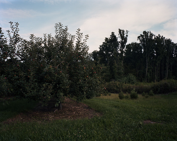 Apple orchard, Cumberland County, Pennsylvania, 2009