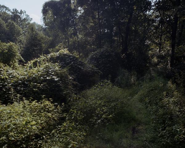 Camp Pine Grove #I, Cumberland County, Pennsylvania, 2009