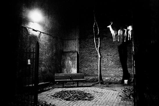Reindeers in a park, Philadelphia, 1999