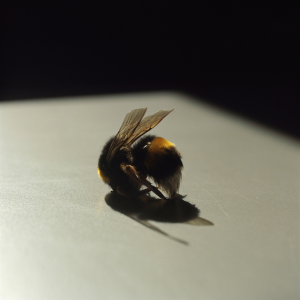 Bee, 2010-2013