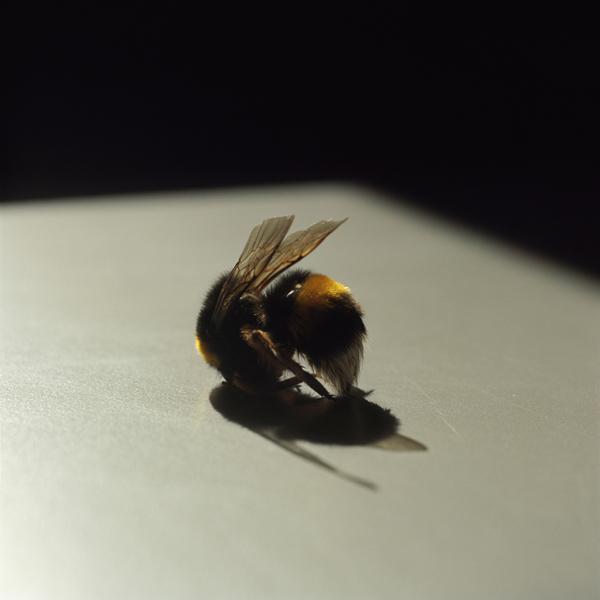 Bee, 2010–2013