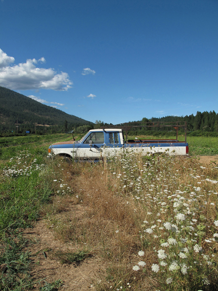 Queen Anne's lace and parked truck, Nelsen Family Farm, Kerbyville, OR, August 2010