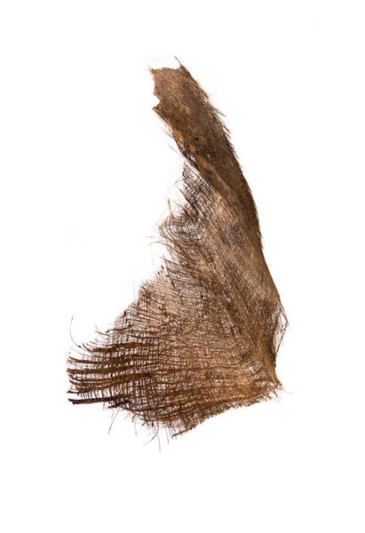 Captiva (Palm-2), 2013