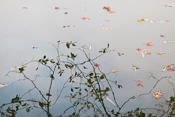 Hangzhou Pond, 2009