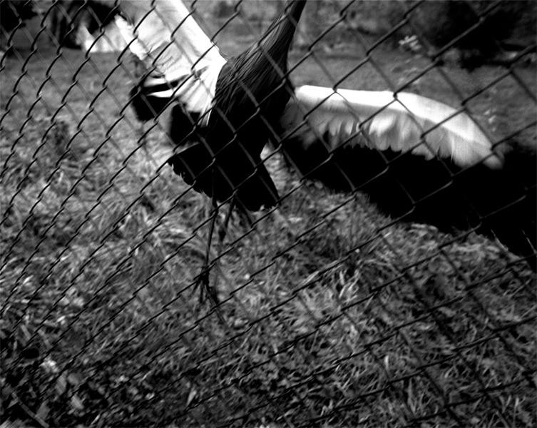 Zoo #7, 2006-2007