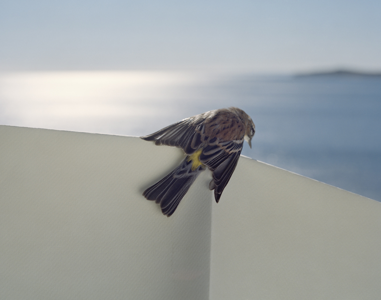 Untitled, 2013. Yellow-Rumped Warbler. Manomet, Massachusetts