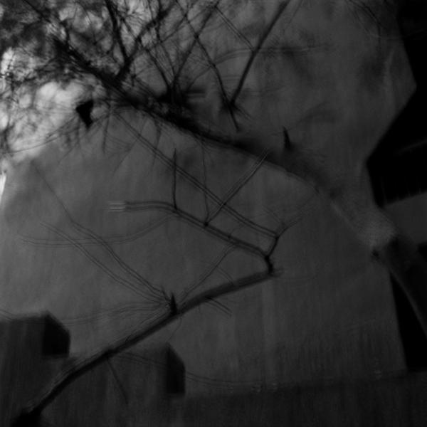 The Tree, 2010
