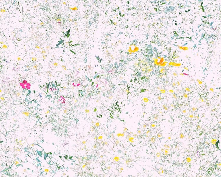 Aaron_Rothman_Wildflowers(PVF1).jpg