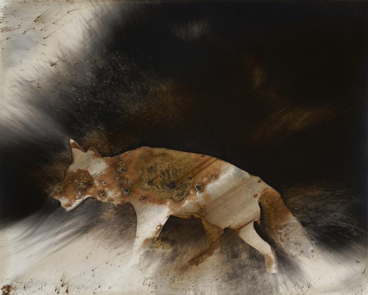 Coyote, #6, 2016