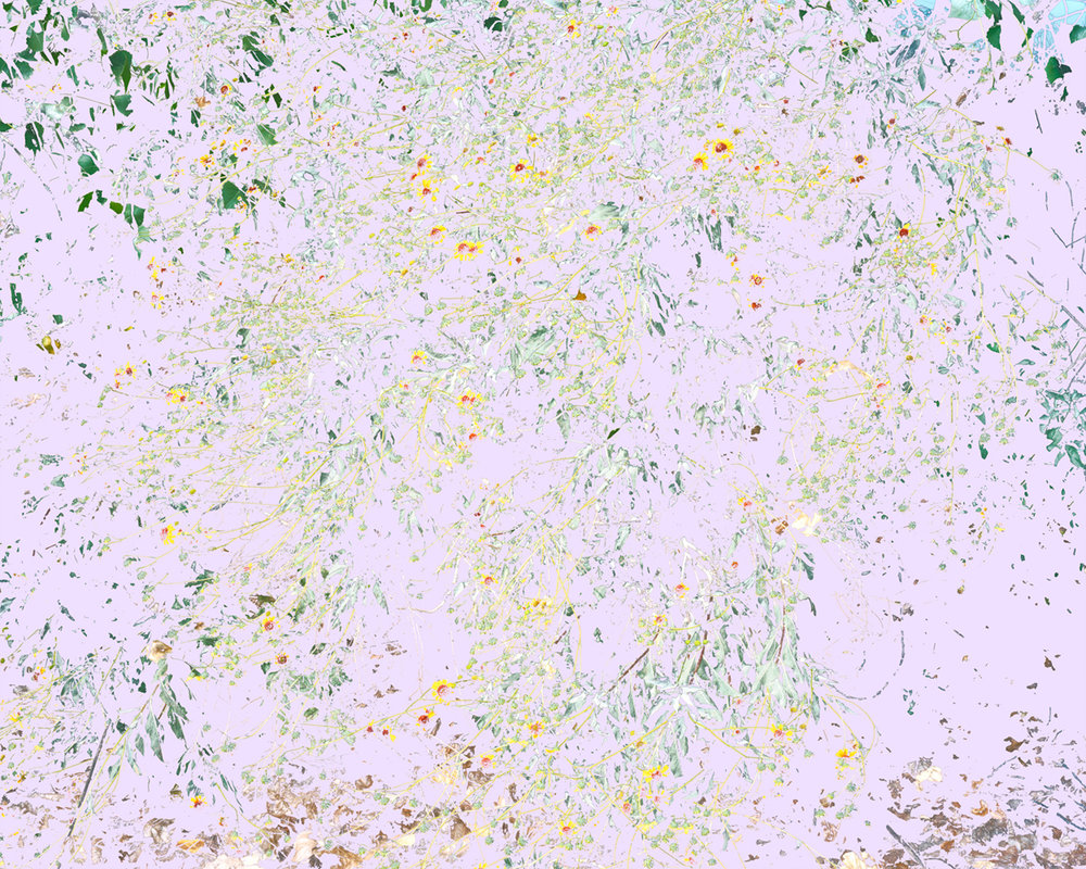 Wildflowers (RS2), 2014