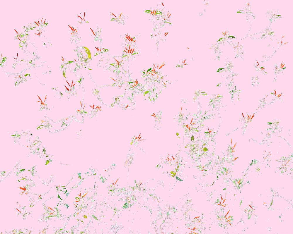 Wildflowers (C1), 2014