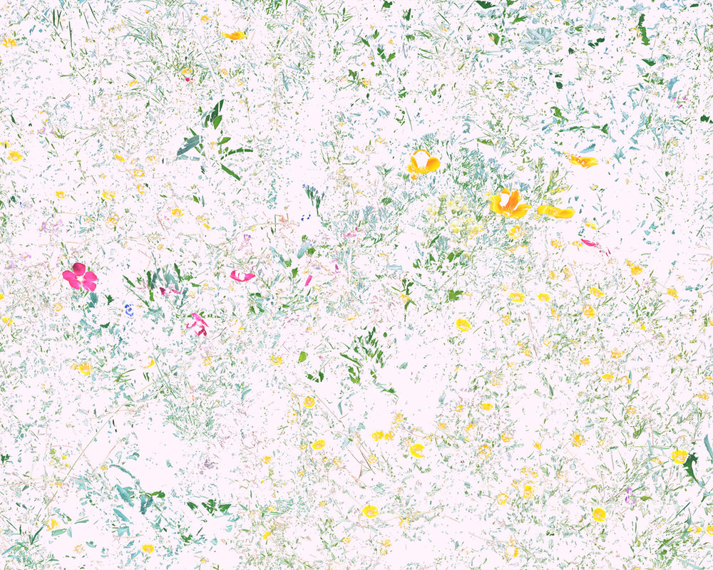 Wildflowers (PVF1), 2014