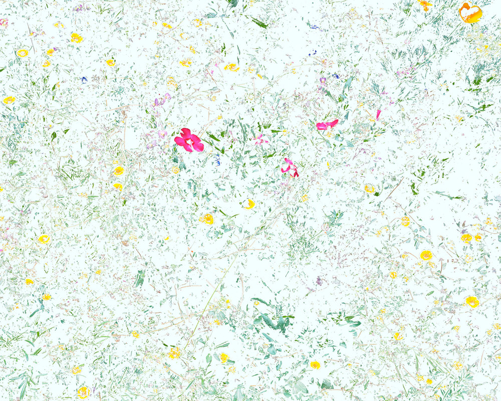 Wildflowers (PVF5), 2014