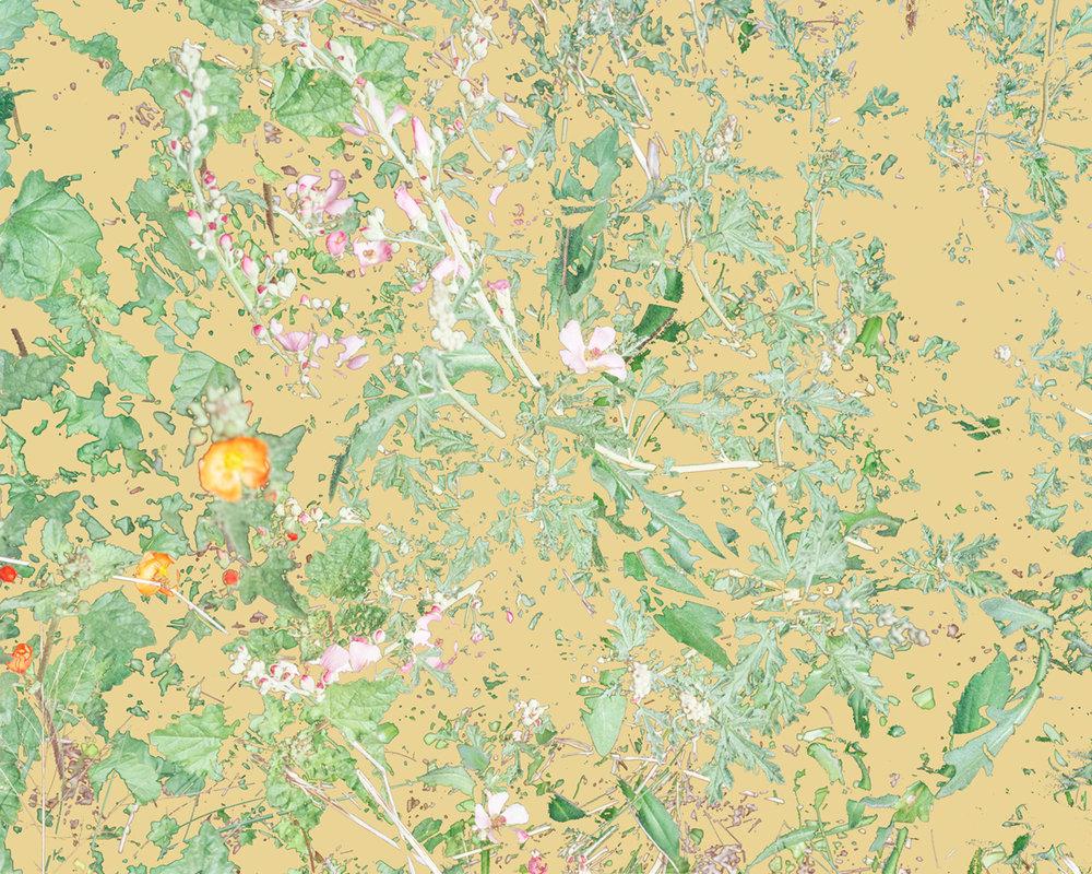 Wildflowers (PVGM2), 2015