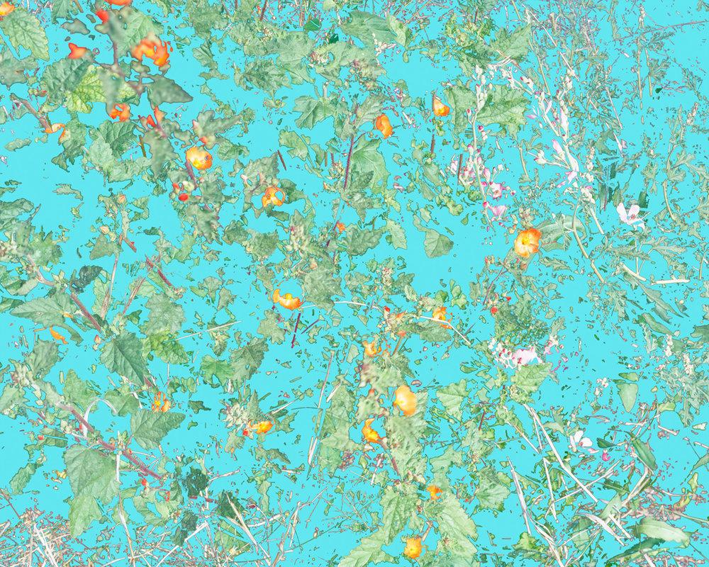 Wildflowers (PVGM1), 2015