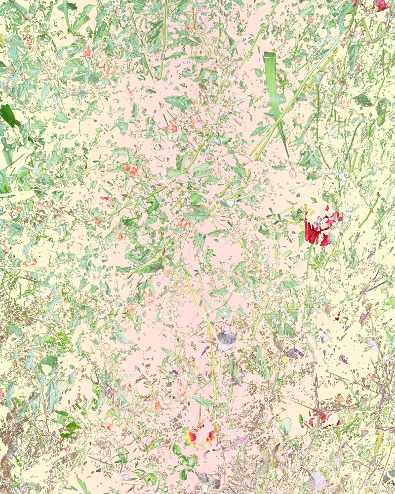 Wildflowers (PVGM3), 2015