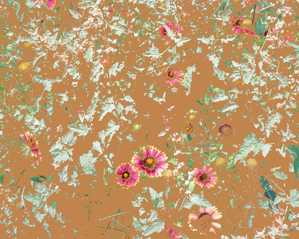 Wildflowers (PW1), 2015
