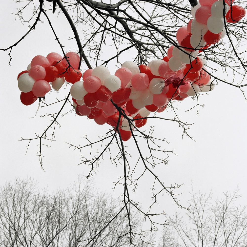 Valentine's Day, Chicago, Illinois, 2009