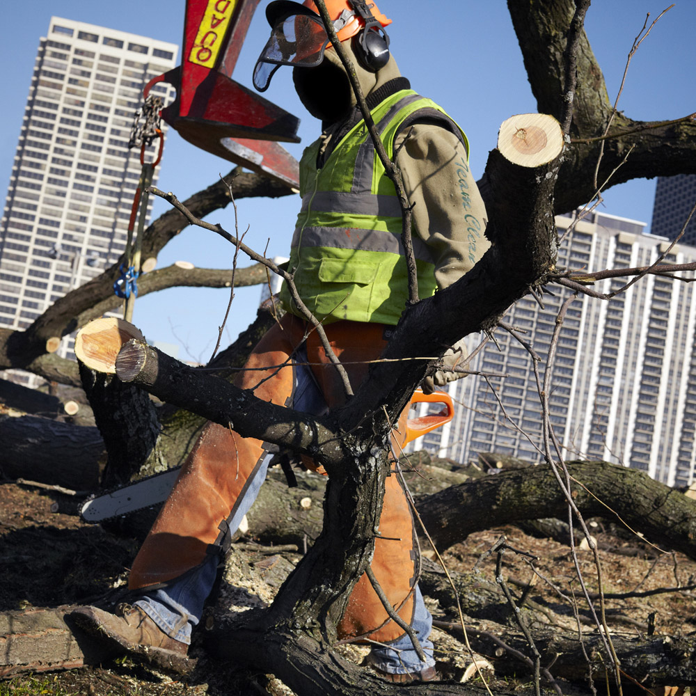 Tree Removal, Chicago, Illinois, 2012
