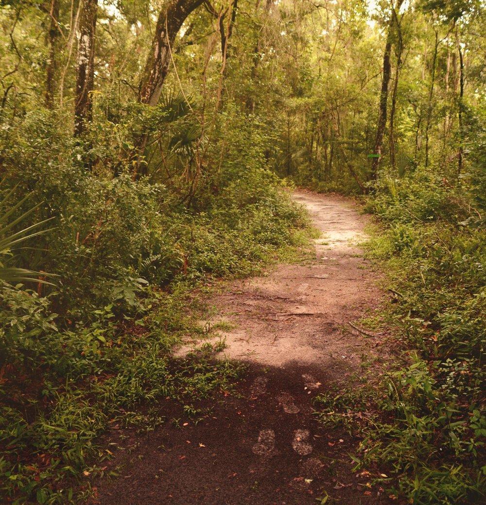 mailchimp TARC Trail.jpg
