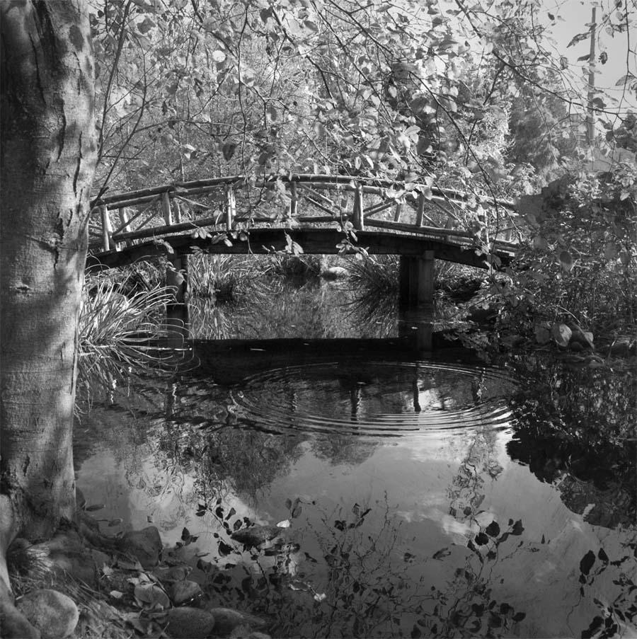 bridge at lost lagoon