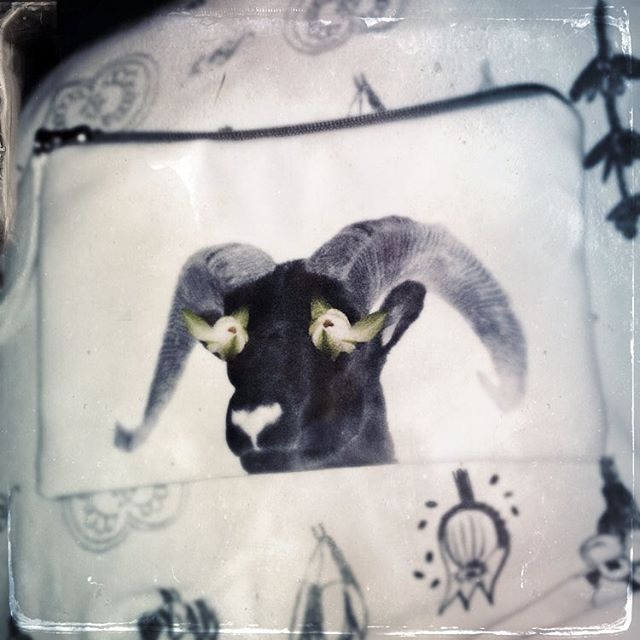 I love a little surrealism in the morning #wildwaterlilies #bighornsheep #surrealism #cosmeticbag #soft #animal #rockies #canada #handmade #4oceansart