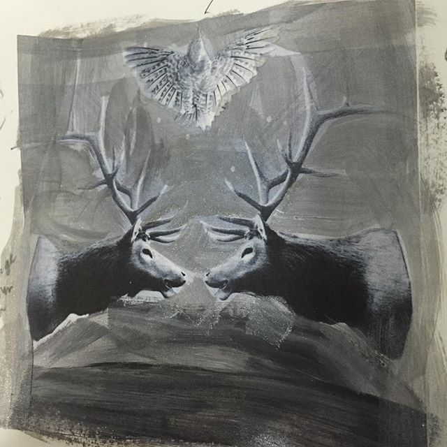 Opening old sketch books #deer #stags #faceoff #blackandwhite #heatherjohnstonphotography #4oceansart #canadianartist