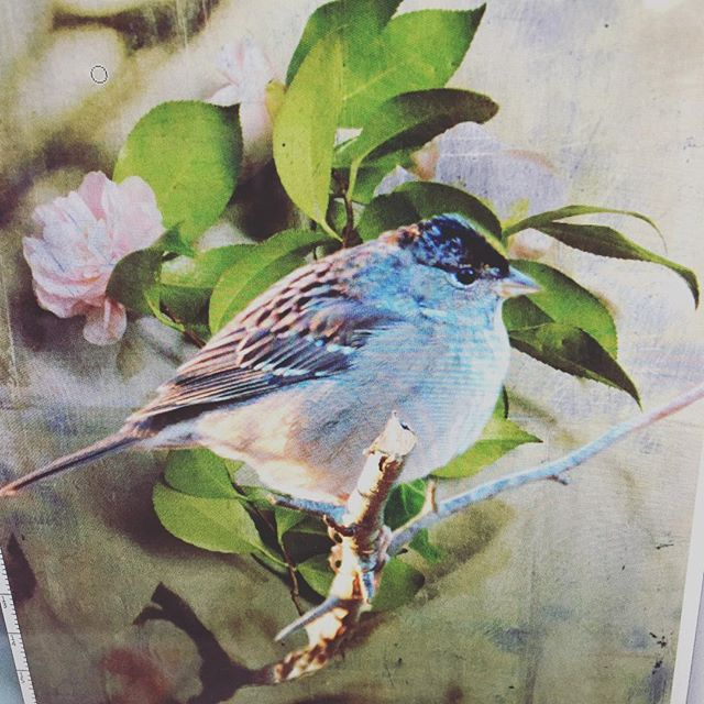 Spring is just around the corner #dancing #birdsong #spring #flowers #print