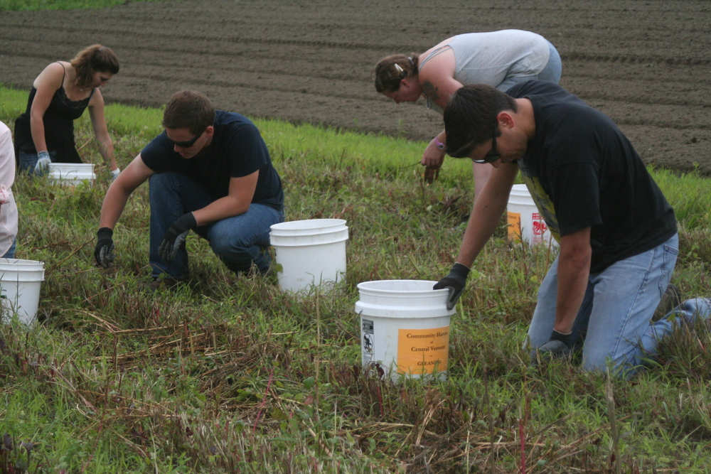 CHCV volunteers glean beets that will be donated