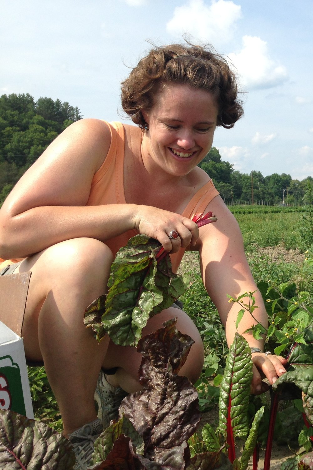 Allison gleans chard at Dog River Farm