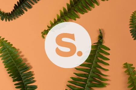 Sundots-3x2.jpg