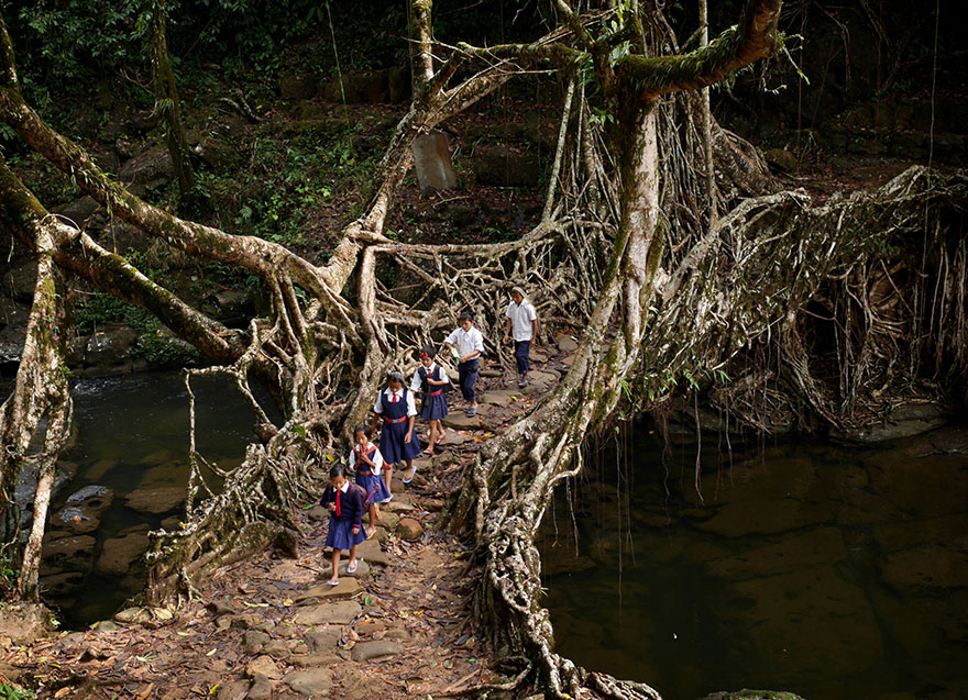 Kids Traveling Through The Forest Across A Tree Root Bridge, India