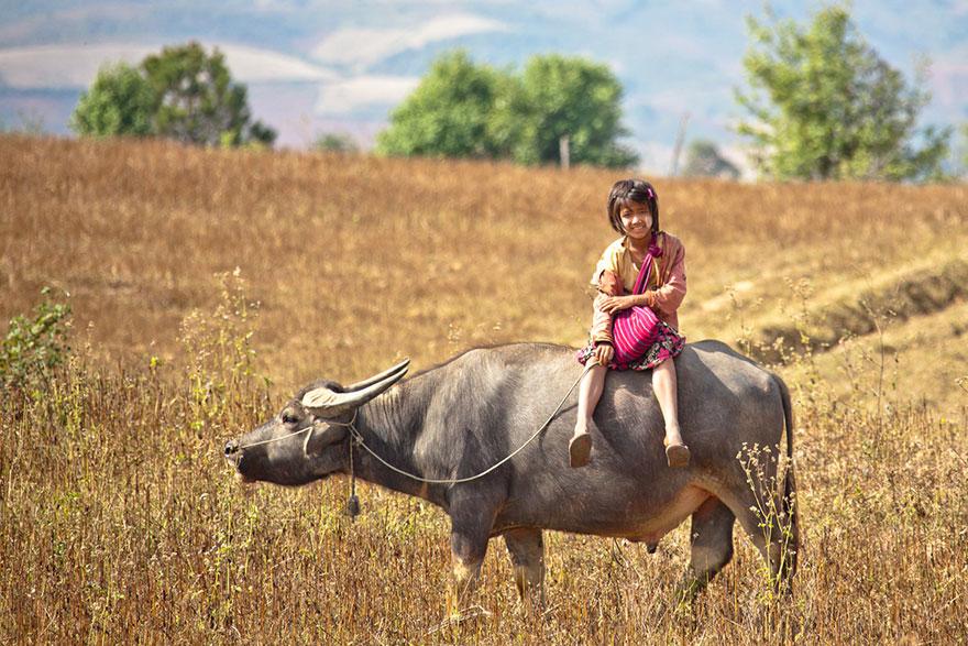 A Girl Riding A Bull To School, Myanmar