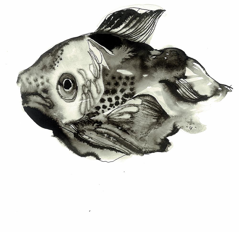 pez tinta.jpg