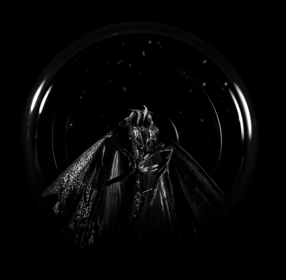 moth model copy.jpg