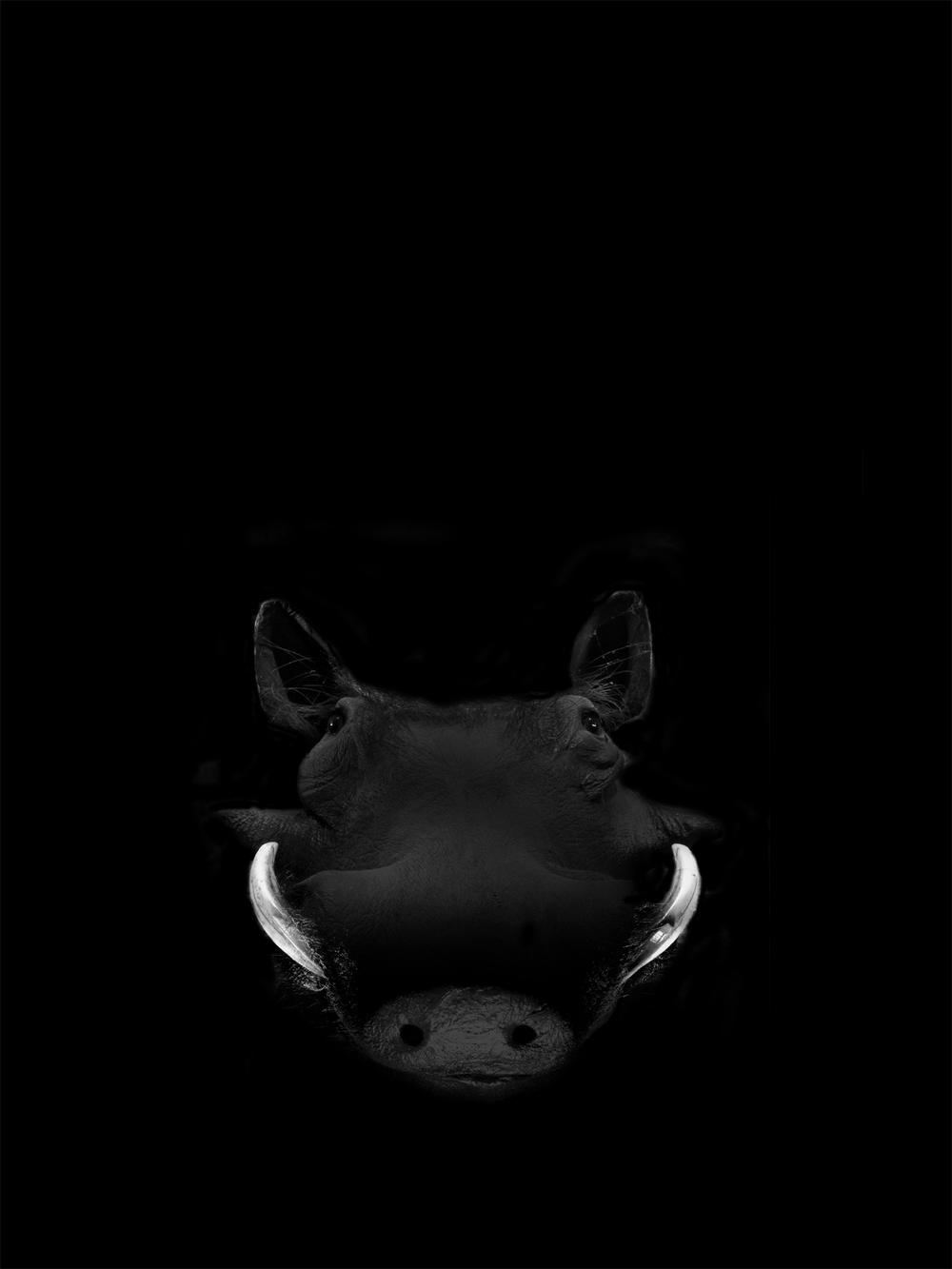boar copy.jpg