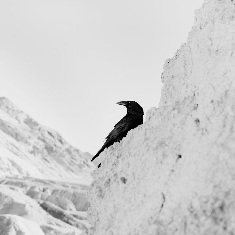 ice raven copy.jpg