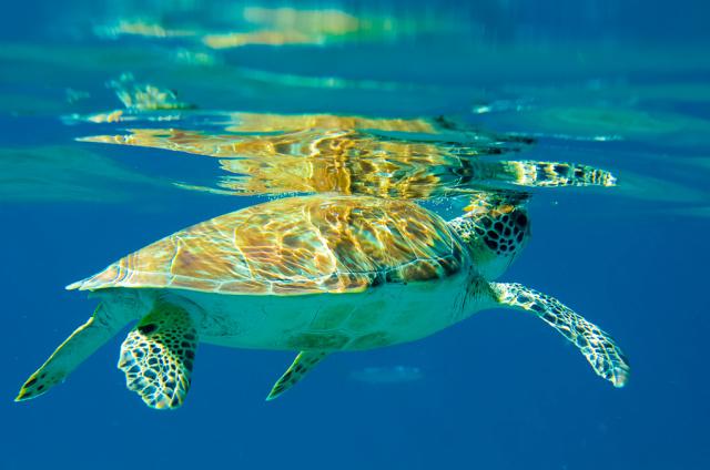 Turtle_1.jpg