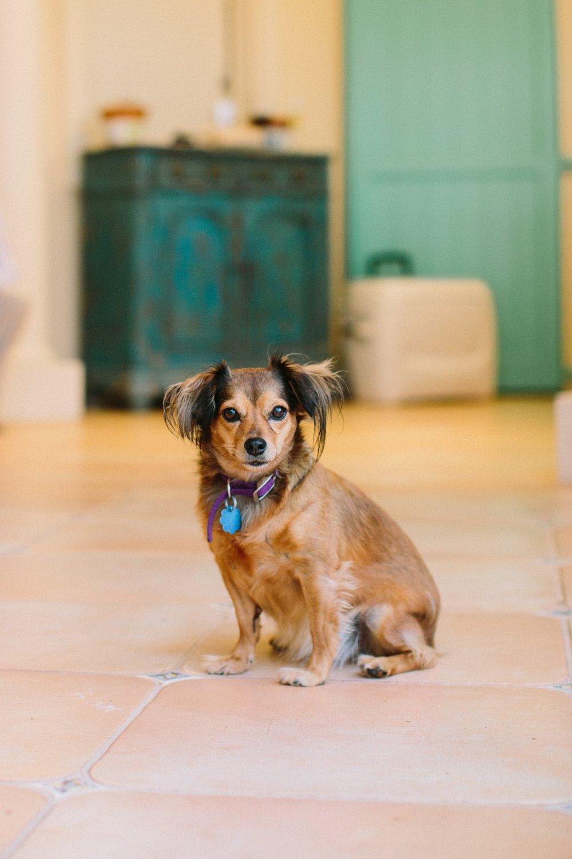cookie - island rescue dog