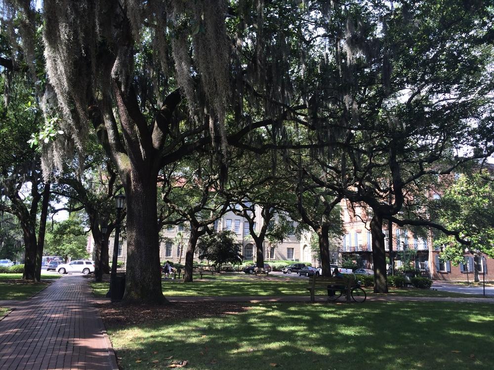 Os carvalhos, que estão por toda a cidade e uma das inúmeras praças do Distrito Histórico.
