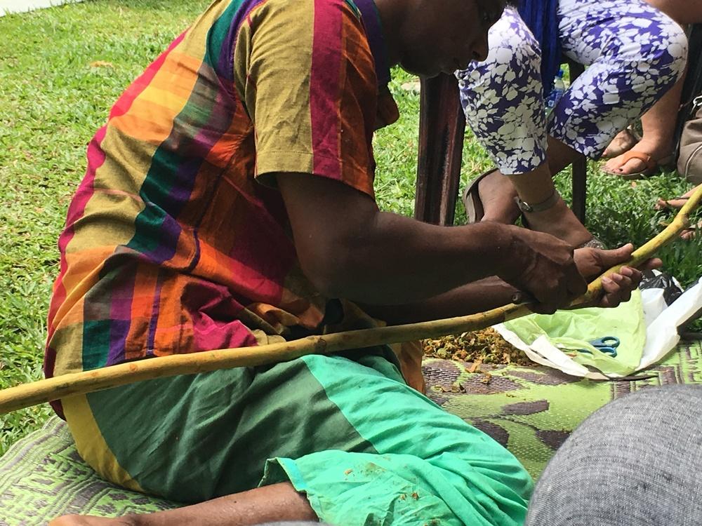 Depois de terminada a preparação, começa-se a extração da canela. O artesão começa pelo meio do caule, fazendo cortes de aproximadamente 20cm no sentido do comprimento. Depois corta em torno do caule, em cima e embaixo deste primeiro corte e solta a casca que depois de seca será a canela.