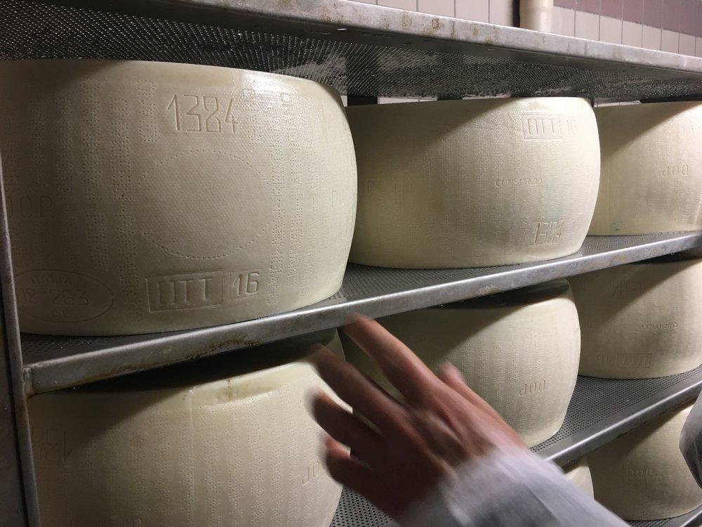 Depois disso os queijos vão para câmaras de temperatura controlada. até que sua casca se torne mais rígida e possa ser transportado para as prateleiras para a maturação.